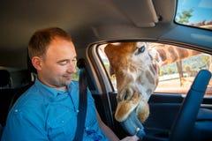 Giraffet satte huvudet i bil och väntande mat från turist Arkivbilder