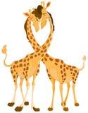 giraffförälskelse Royaltyfri Foto