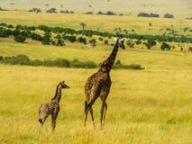 Girafffamilie Royalty-vrije Stock Fotografie