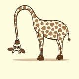 Giraffhalsen böjde till jordningen Arkivfoton