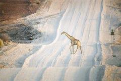 Giraffkorsning väg Arkivfoto