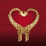 Giraffs par Royaltyfria Bilder