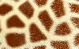 Girafftextur som isoleras på vit bakgrund royaltyfri bild