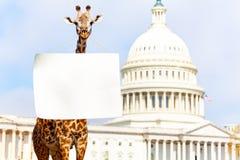 Girafprotesteerder met leeg leeg teken op hals stock fotografie
