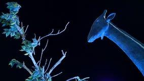 Girafstandbeeld in nachtlicht stock footage