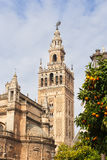 Giralda bell tower of the Cathedral of Seville and oranges Royalty Free Stock Photos