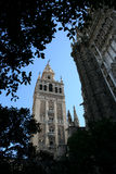 Giralda and cathedral of Seville Royalty Free Stock Image