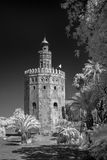 The Giralda in Sevilla. Infrared photograph of the Giralda in Seville Stock Photography