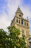 The Giralda of Seville and orange Stock Images
