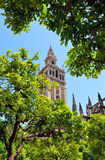 The Giralda Tower at the Cathedral of Seville, Andalusia, Spain. View of the tower of the Giralda, the famous bell tower of the Cathedral of Seville, Andalusia Royalty Free Stock Photography