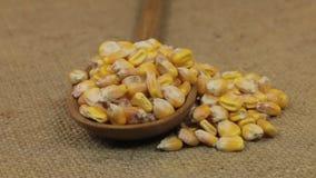 Girando uma colher, transbordando com as grões do milho, encontrando-se na serapilheira video estoque