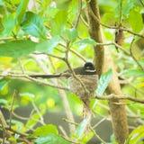 Girante laterale pezzato sul nido Immagini Stock