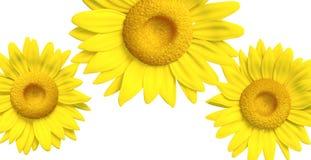 girasol 3D Imagen de archivo libre de regalías
