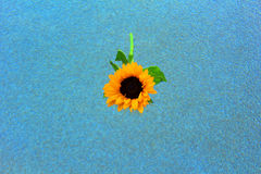 Girasol Fotografía de archivo libre de regalías