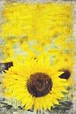 Girasol amarillo brillante, Tailandia Digitaces Art Impasto Oil Paint ilustración del vector