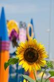 Girasol amarillo brillante y edificio colorido en fondo Imagen de archivo libre de regalías