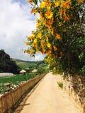 Girasol de Maxican en el camino en Tailandia Foto de archivo