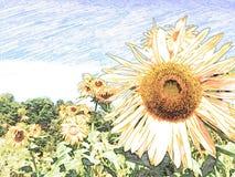girasol del dibujo con el lápiz Imagen de archivo
