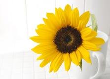 Girasol en una taza blanca Imagen de archivo libre de regalías