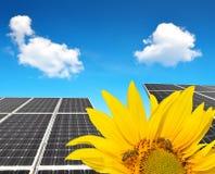 Girasol floreciente en los paneles solares del fondo Foto de archivo libre de regalías