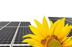 Girasol floreciente en los paneles solares del fondo Imagen de archivo libre de regalías