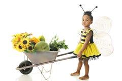 Girasol que ama la abeja de Buzzi Fotografía de archivo