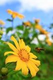 Girasol y abeja Fotografía de archivo