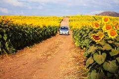 Girasol y un coche en jardín Fotos de archivo