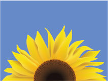 Girasole Illustrazione di Stock