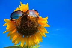 Girasole con gli occhiali da sole fotografia stock