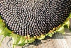 Girasole con i semi su fondo di legno fotografia stock