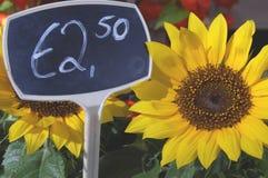 Girasole da vendere in un negozio con un euro prezzo da pagare Fotografie Stock