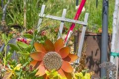 Girasole del giardino a marzo fotografia stock
