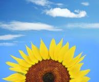Girasole e cielo blu Immagine Stock