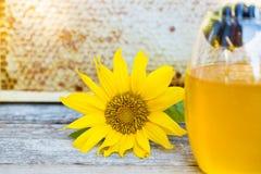 Girasole e miele di gocciolamento davanti al favo fotografie stock libere da diritti