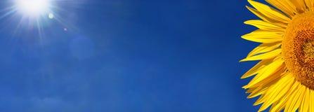 Girasole e sole Fotografia Stock Libera da Diritti