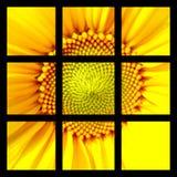 Girasole quadrato Fotografie Stock Libere da Diritti