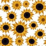 Girasole senza cuciture del modello di fiore Fotografia Stock Libera da Diritti