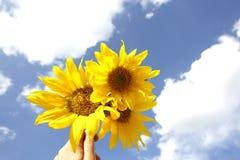 Girasoles amarillos hermosos en un cielo azul Imagenes de archivo