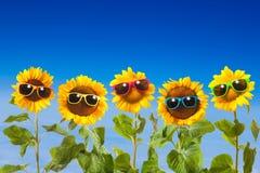 Girasoles con las gafas de sol Imágenes de archivo libres de regalías