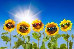 Girasoles con las gafas de sol Fotografía de archivo