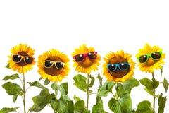 Girasoles con las gafas de sol Foto de archivo