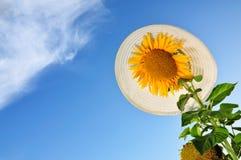 Girasoles con vertical del cielo azul y del sombrero Foto de archivo libre de regalías