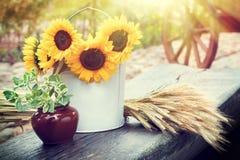 Girasoles en cubo, oídos del trigo y pote con la planta en la tabla Fotos de archivo libres de regalías
