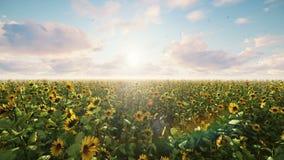 Girasoles hermosos en el campo en la salida del sol Campo con los girasoles, las mariposas y los insectos en verano ilustración del vector