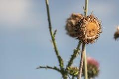 Girasoles o Wildflowers secados Fotografía de archivo libre de regalías