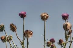 Girasoles o Wildflowers secados fotografía de archivo