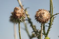 Girasoles o Wildflowers secados Imagenes de archivo