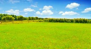 Girasoles soleados en campo del verano foto de archivo libre de regalías