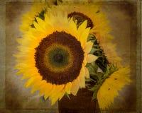 Girasoles texturizados Imagenes de archivo